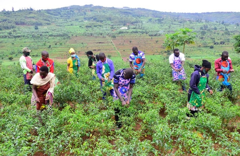 Field group exercise on the usage of harvesting Apron, POSCO Rwanda. Photo by GCCA