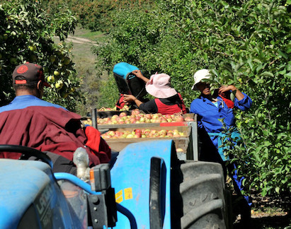 SA Fruit industry promoting jobs and vaccinations. Image credit: Fruitnet